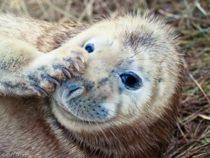 """Basfull Seal"""